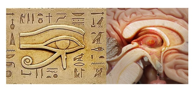 human brain pineal Eye of Horus