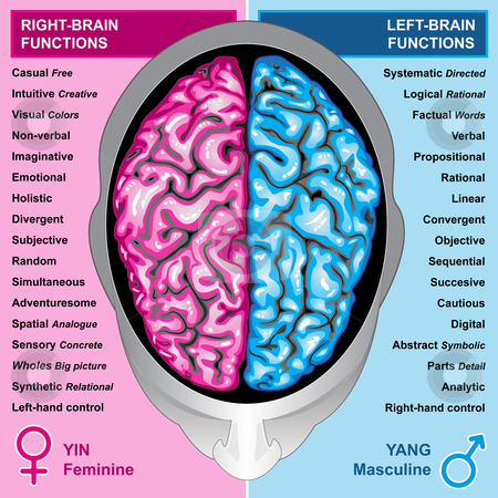 the left and right functions of the human brain